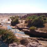 oasis  dans la region