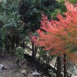 Mikado Gorge