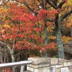 Fall colors of the Cumberland Mountains