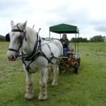 Bobbie makes the four-wheeled carriage look like a dinky toy!