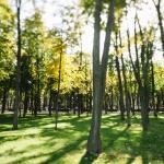 Утро в летнем парке