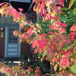 A day full of beautiful fall color around Ada's Place!