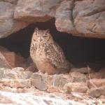 Gayuin Birding Tours - Day Tours
