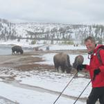 Cross Country skiing with wildlife -Bison winter home
