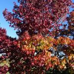 les arbres sont magnifiques en automne