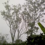 the mist at  Mimpi Restaurant, Munduk Moding Plantation, Buleleng, Bali