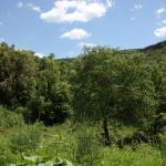 Bild från Ecotourism Can Sala