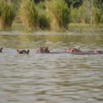 Arbaminich town,Nech sar national park, Crocodile two lakes