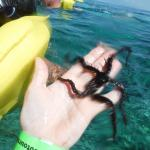 Our snorkle guide out on the larger reef dove down and pulled up a spiny starfish for us to hold