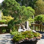 Another bonsai