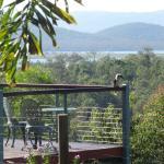 Kookaburra sitting on the deck