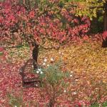 Spinney garden