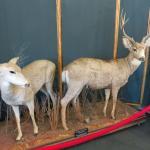 Foto de Big Bear Discovery Center