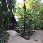 Easy access in a rainforest setting