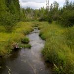 Oden Creek
