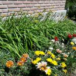 todo el jardin florecido