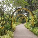 สวนพฤกษชาติสิงคโปร์