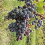 Italian Wine Tours - Day Tours