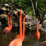 Flamingo Gardens Davie Florida 2014