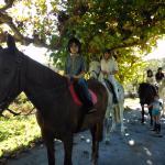 Buen profesor y buenos caballos