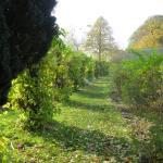 Park Pfaueninsel Foto