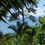 Copa de Arbol Beach and Rainforest Resort Foto