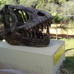 Réplica de um fóssil