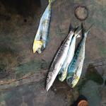 Foto de Lady Sarah Fishing Charters
