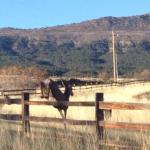 Zion Ponderosa Ranch Resort Photo