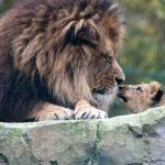 Blackpool Zoo