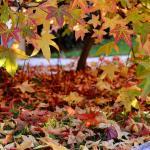 Un lussureggiante autunno!