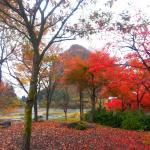 紅葉も楽しめます