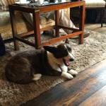Sunday afternoon friends brought two Cardigan Welsh Corgis  for me to admire (Welch corgis in Wa
