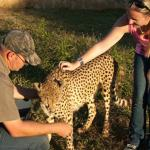 Visit the Predator Park nearby and get up close and personal with some animals