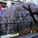 Atami Geigi Kenban Kabu Renjo Foto