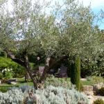 Le petit jardin de senteurs