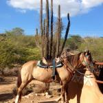 Foto de Ranch Cabatucan
