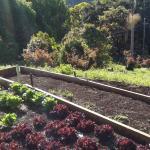 Freeman's Organic Farm