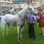 Thousand Stars after a great win at Auteuil.
