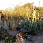 The cactus garden and National Register of Historic Places building are the reason to visit BeDi