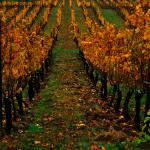 Youngberg Hill Vineyards & Inn Foto