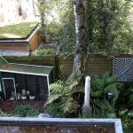 Chicken coop in the backyard = fresh eggs