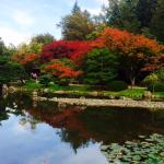 Fall color reflected in the koi pond.