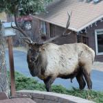 Photo de McGregor Mountain Lodge