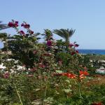Photo de Nissi Beach Resort