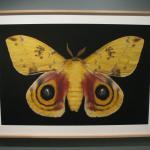 Moth in detail