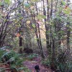 OSU McDonald-Dunn Research Forest