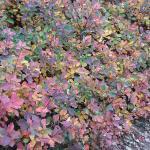 I colori del Carso in autunno