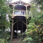 Baumhaus von unten