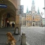 """Das Rathaus (radnice"""") ist nur einen Steinwurf entfernt"""